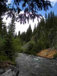 Mineral Creek 00615